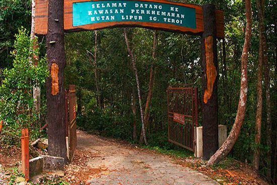 Sungai Teroi Forest
